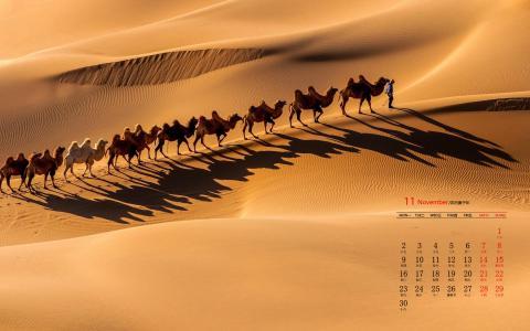 2020年11月沙漠骆驼风景