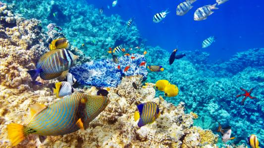 美丽的海底世界