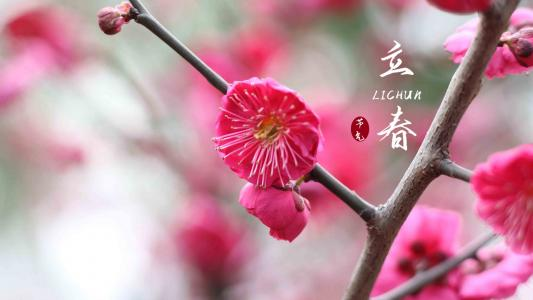 传统节气之立春梅花带字图片