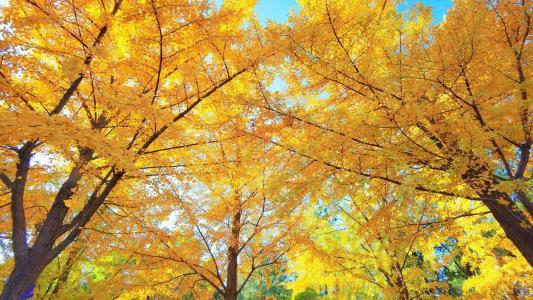 北京香山公园风光