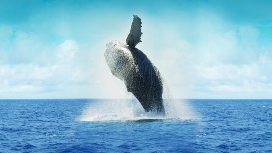 大海上的鲸鱼