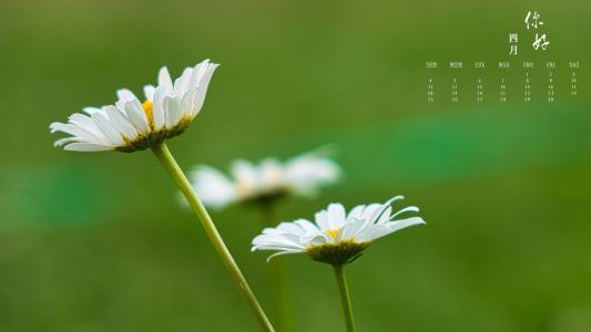 2021年4月清新雏菊日历