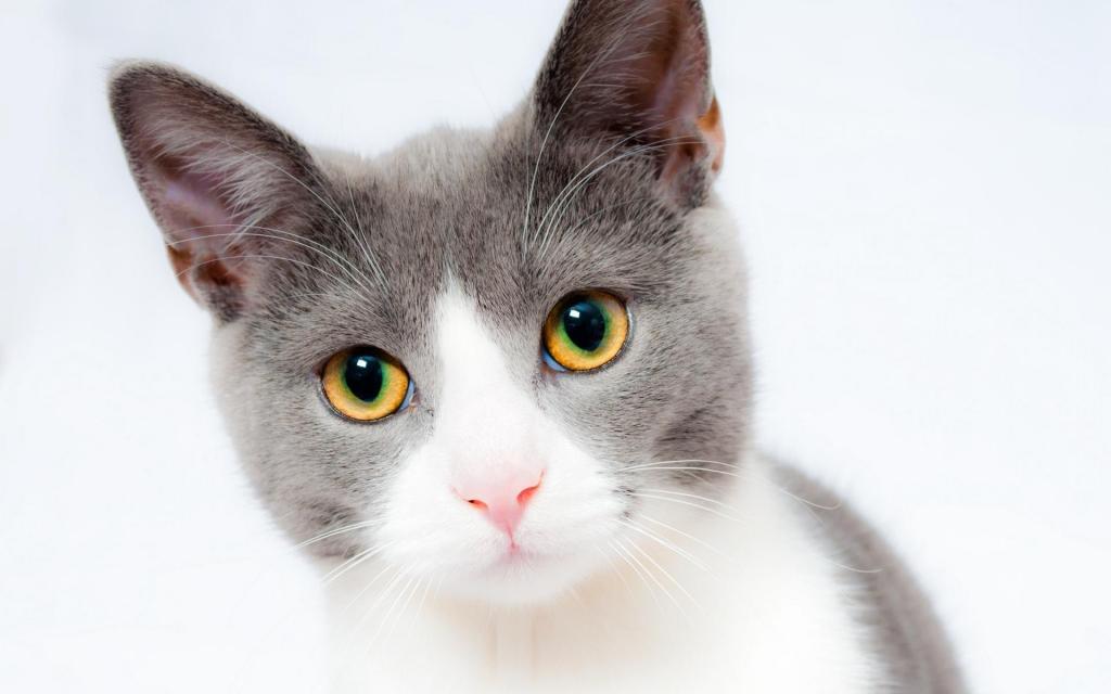 家有萌宠小猫咪写真