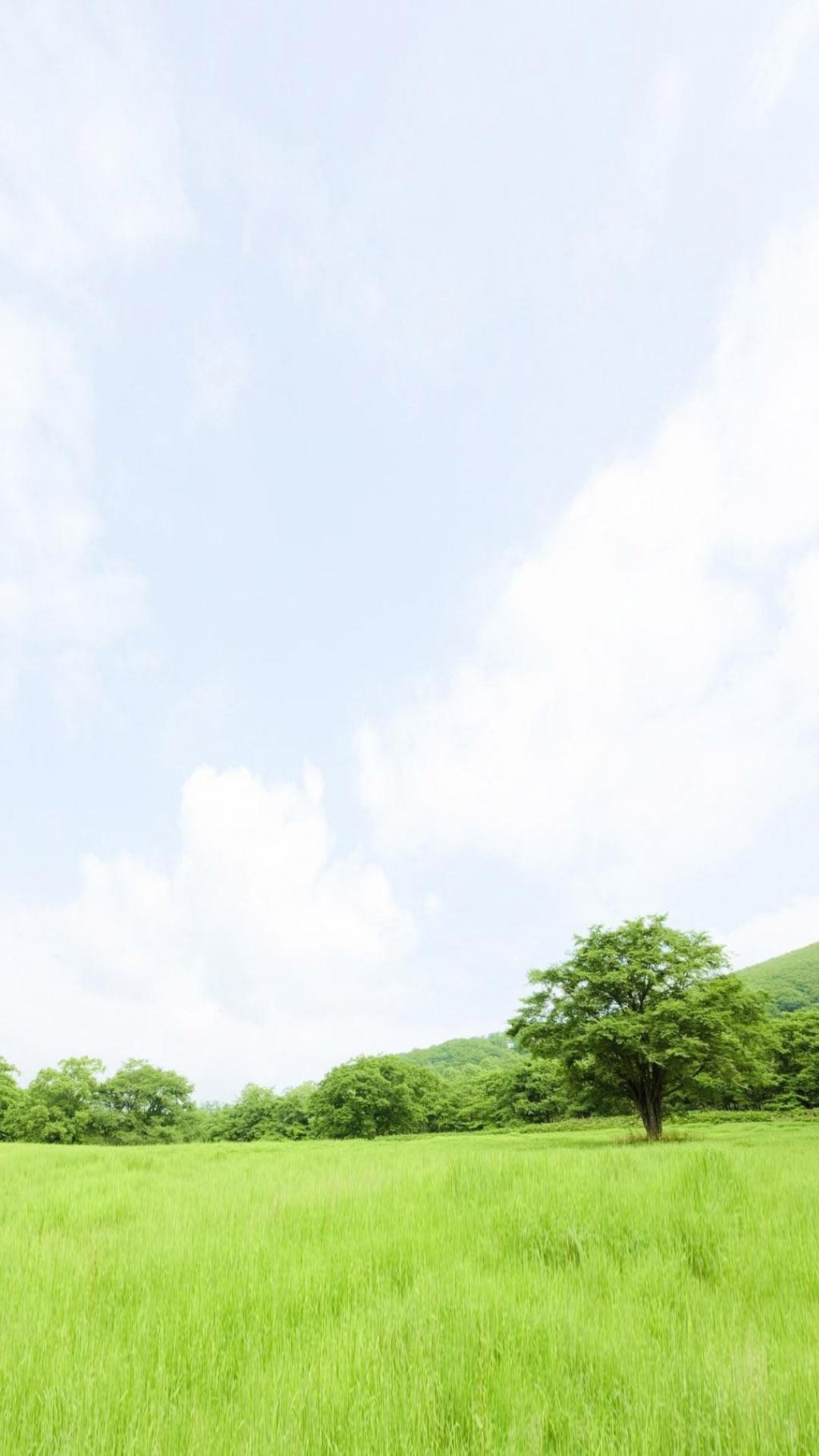 小清新绿色护眼草原风景