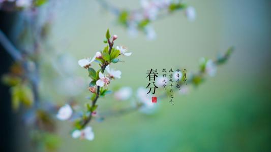 二十四节气之春分光景