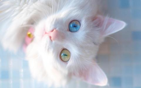 呆萌可爱的小猫咪