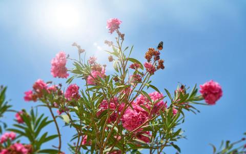 盛开在阳光下的花朵