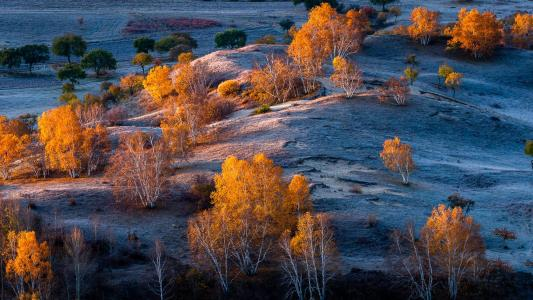 金色的白桦林风光