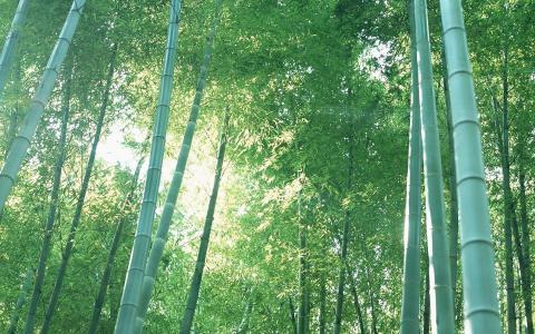 小清新护眼绿色竹林风光