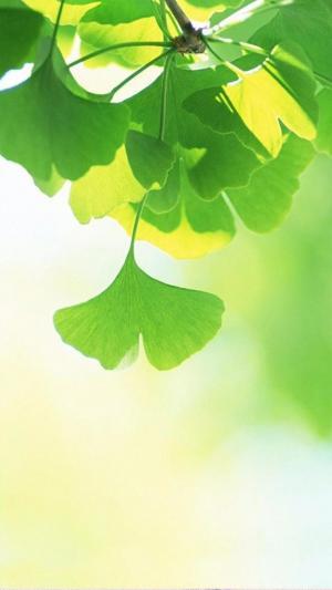 绿色小清新护眼植物