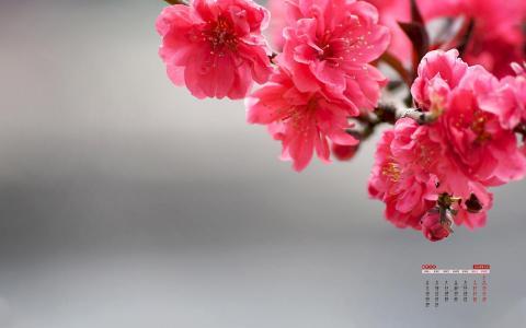 2020年3月小清新植物日历