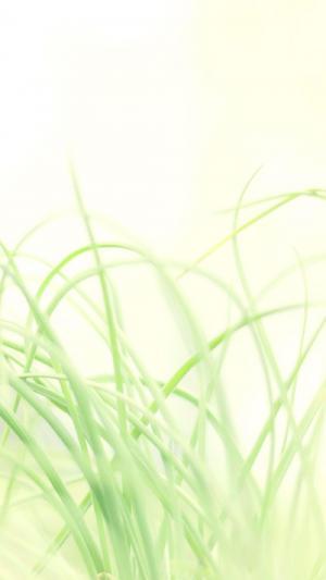 小清新绿色护眼植物