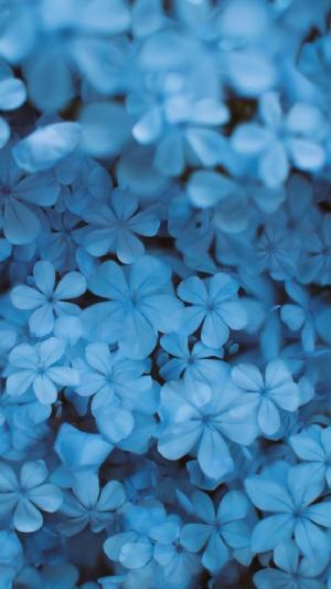 唯美梦幻蓝色小花