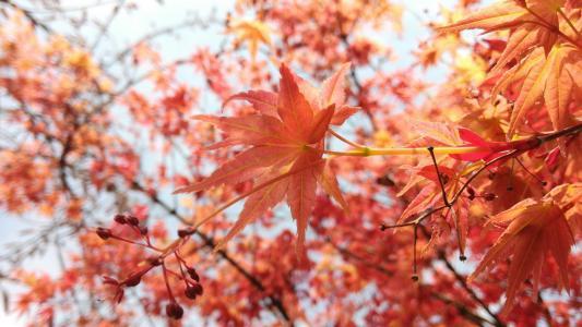 秋季红叶意境美景图