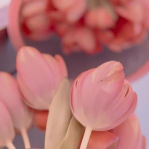 唯美的郁金香花朵