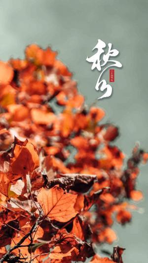 中国传统二十四节气之秋分