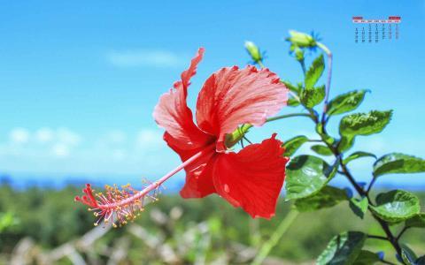 2020年4月蓝天下植物小清新日历