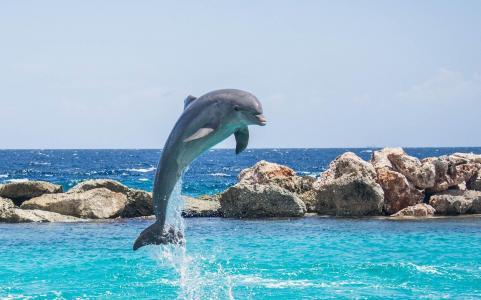表演精彩节目的海豚