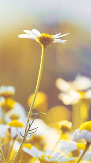 唯美意境小清新花卉植物