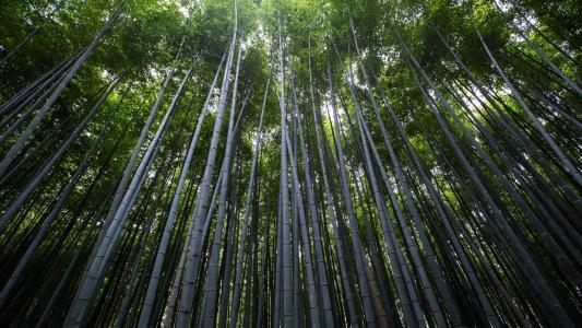 碧绿护眼的竹林美景