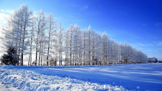 冬日唯美雪景迷人风光