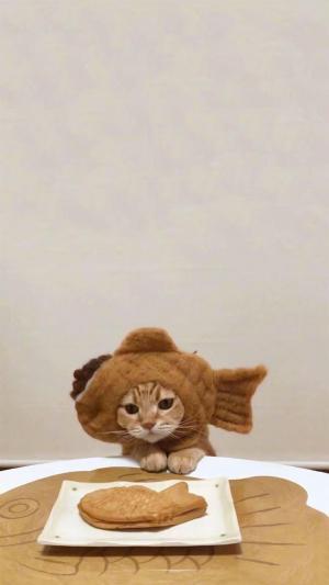 戴着食物头套的可爱猫咪
