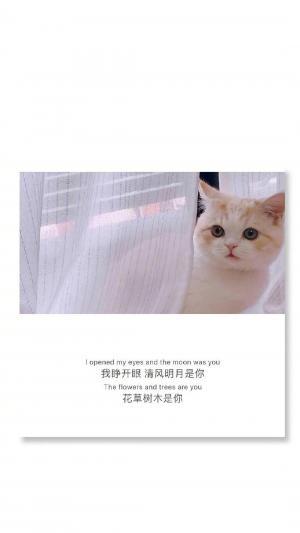 萌宠猫咪带字配图