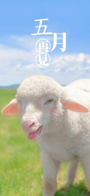 五月再见可爱小羊配图