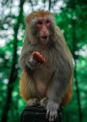 顽皮可爱的猴子